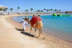 Wielbłądzi odprowadzenie na plaży zdjęcia royalty free