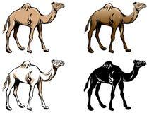 Wielbłądzi rysunku set ilustracja wektor