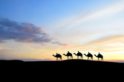 Wielbłądzia karawana Zdjęcie Royalty Free