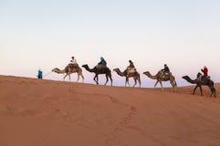 Wielbłądzia karawana przy saharą, Maroko fotografia stock