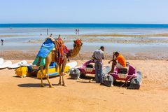 Wielbłądzia pozycja na plaży Czerwony morze w Egipt Zdjęcia Royalty Free