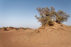 Wielbłądzia przejażdżka na saharze zdjęcia royalty free