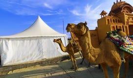 Wielbłądzia przejażdżka przy wielkim Rann Kutch Rann Utsav, Gujarat zdjęcia stock