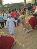 Wielbłądzia przejażdżka w Dubaj obraz stock