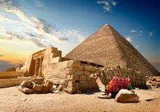 Wielbłądzie pobliskie ruiny obrazy stock