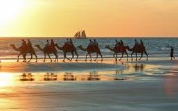 Wielbłądzie wycieczki turysyczne na kabel plaży Broome Broome, zachodnia australia fotografia royalty free