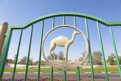Wielbłądzia postać w ogrodzeniu Obraz Royalty Free
