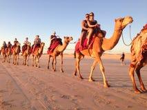 Wielbłądzia przejażdżka Fotografia Royalty Free