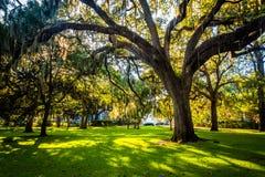 Wielcy dębowi drzewa i hiszpański mech w Forsyth parku, sawanna, Geor Fotografia Stock