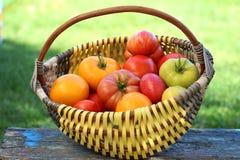 wielcy dojrzali pomidory Fotografia Royalty Free