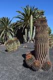 Wielcy kaktusowi gatunki kombinacja i różnorodni rośliny typ Fotografia Royalty Free