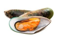 Wielcy mussels odizolowywający obraz royalty free