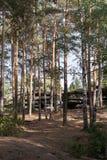 Wielcy płatowaci granitowi kamienie kłamają wśród zielonego sosnowego lasu Zdjęcie Stock