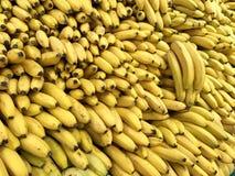 Wiele świeżych owoc żółci banany w supermarkecie, karmowy pojęcie zdjęcia royalty free