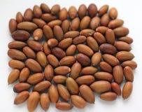 Wiele acorns dąb odizolowywający na białym tle zdjęcie royalty free