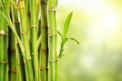 Wiele badyle bambus z liśćmi Fotografia Royalty Free