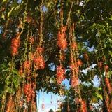 Wiele czerwień kwiaty Obrazy Royalty Free