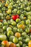 Wiele czerwoni czereśniowi pomidory Fotografia Royalty Free