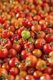 Wiele czerwoni czereśniowi pomidory Obrazy Stock