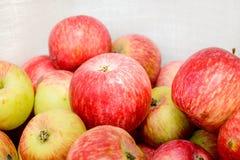 Wiele czerwoni jabłka Zdjęcie Stock