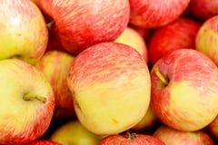 Wiele czerwoni jabłka Fotografia Royalty Free