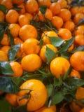 wiele dojrzali pomarańczowi tangerines z zielonymi liśćmi zdjęcia royalty free