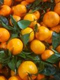 wiele dojrzali pomarańczowi tangerines z zielonymi liśćmi fotografia stock