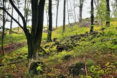 Wiele drzewa w cieniu na górze Bucina wzgórza przy początkiem jesień w zachodniej cyganerii Zdjęcie Royalty Free