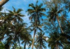 Wiele drzewka palmowe i niebieskie niebo zdjęcie stock