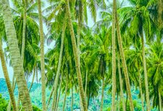 Wiele drzewka palmowe na tle góry obraz stock