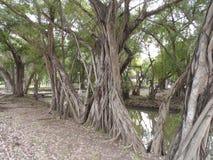 Wiele drzewny spojrzenie lubi jako tylko jeden Szerokość widok zdjęcie stock