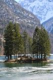 Wiele drzewo w wyspie na wysokogórskim jeziorze zdjęcie stock