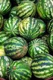Wiele duzi cukierki zieleni arbuzy Zdjęcie Stock