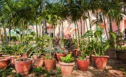 Wiele gliniani garnki z tropikalnymi roślinami i kwiatami w ciemniutkim ogródzie Fotografia Royalty Free