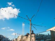 Wiele gołębie ptasi na elektryczni druty Gołąbki siedzi na linie energetyczne nad niebieskim niebem zdjęcia royalty free
