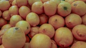 Wiele grapefruitowy, grapefruitowy t?o, fotografia royalty free