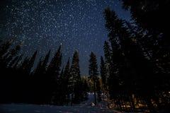 Wiele gwiazdy Nad Lasowi drzewa Fotografia Royalty Free