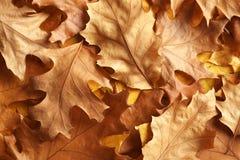 Wiele jesień liście jako tło zdjęcie stock