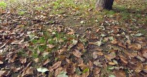Wiele jesień liście na ziemi zdjęcie wideo