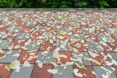 Wiele kapusta kawałki na drodze zdjęcie stock