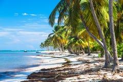 Wiele kokosowe palmy na dzikiej carribean plaży, Atlantycki ocean, republika dominikańska Obrazy Stock