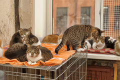 Wiele koty wpólnie zdjęcia royalty free