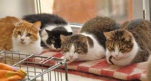 Wiele koty wpólnie fotografia royalty free