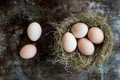 Wiele naturalni Easter jajka w ptaki gniazdują, szczęśliwy Easter pojęcie Fotografia Royalty Free