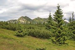 Wiele odcienie kolanowy szalunek, świerczyny i Tatras góry zieleń -, Sistani obraz royalty free