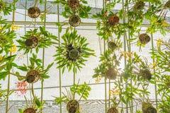 Wiele orchidee r w wiele garnkach, wiesza na stal por?czu z sunshade na wierzcho?ku zdjęcia royalty free