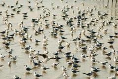 Wiele piękni ptaki Obrazy Stock