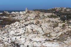 Wiele pingwiny na kamieniu w Betty ` s zatoce, Południowa Afryka zdjęcie stock