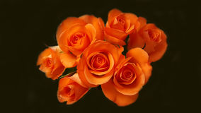 Wiele pomarańczowe róże w wiązce Fotografia Royalty Free