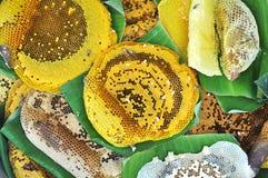 Wiele Pszczoły Honeycomp Rój Fotografia Royalty Free